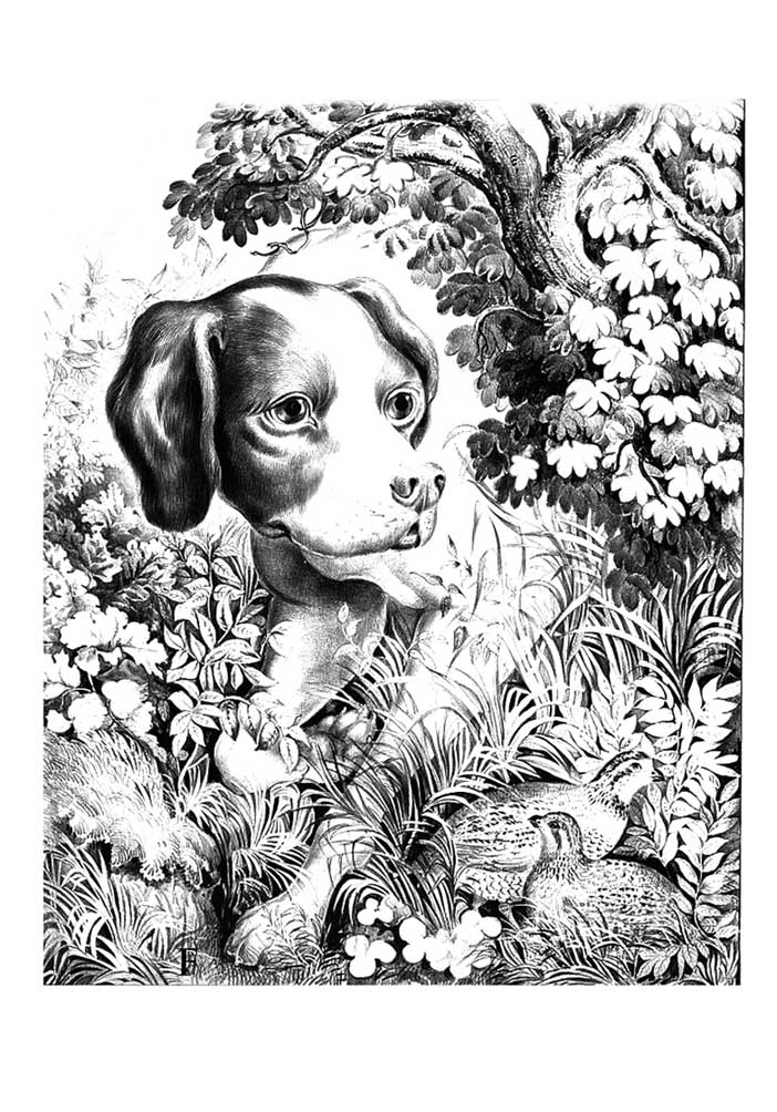 Hard Puppy Coloring Pages - Coloring Home | 1004x702