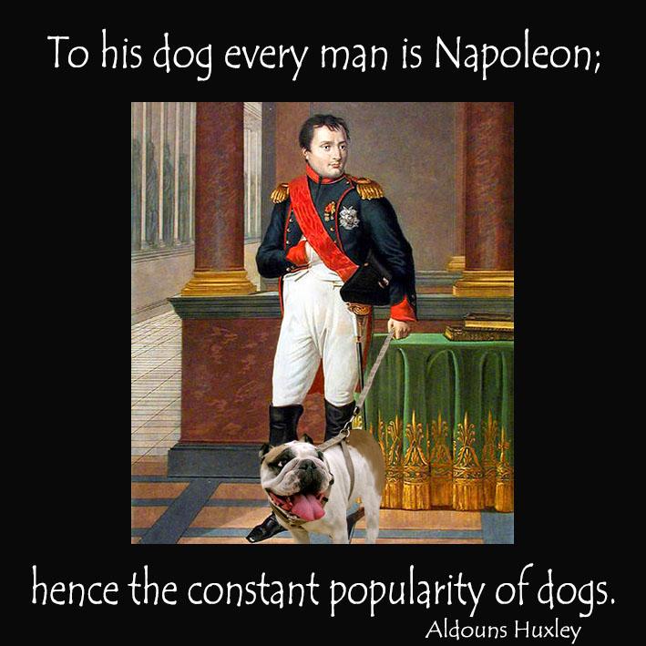 picture quote dog napoleon