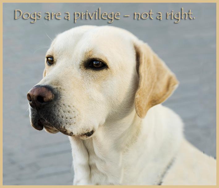 dogs are a privilege quote