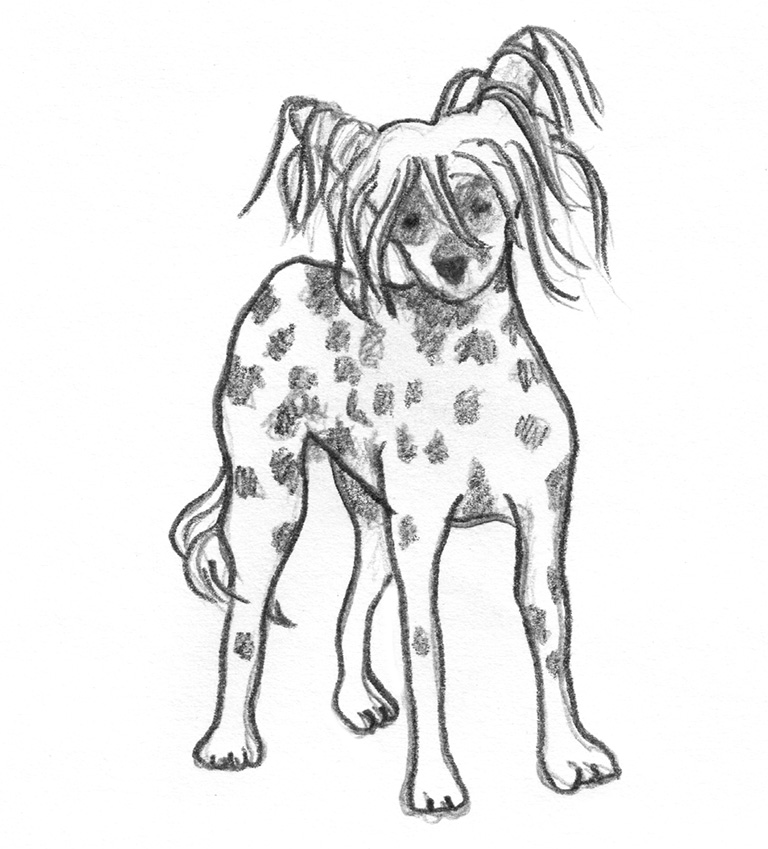 chinese-crested sketches of dogs