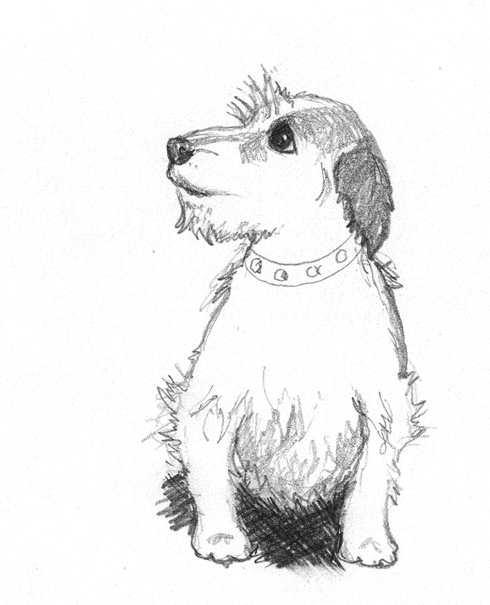 Chinese crested dog sketch · cute dog