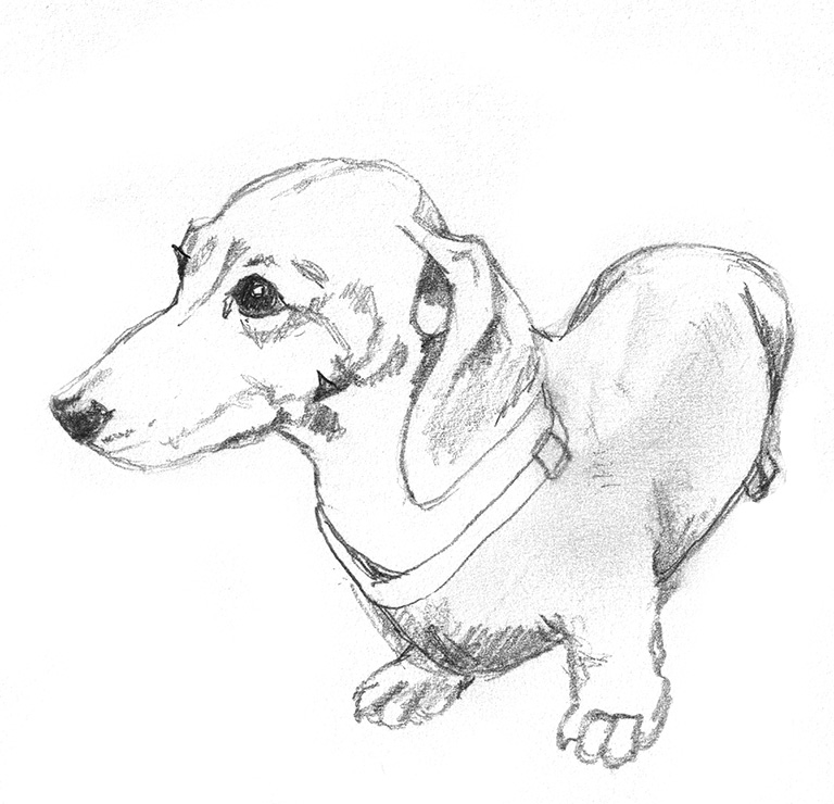 Sketch of dachshund