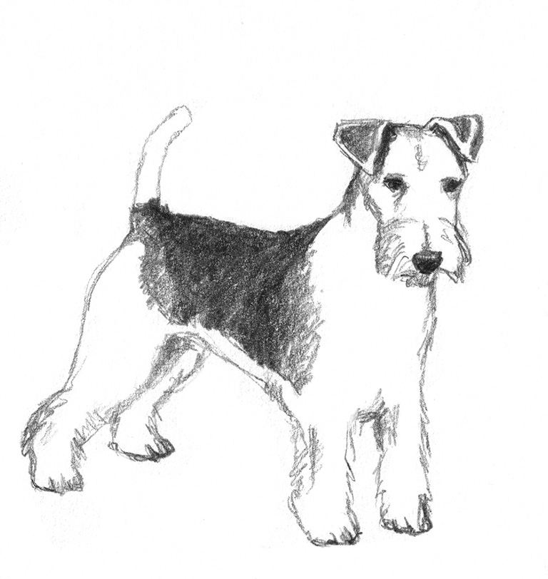 Pencil drawings of dogs dog sketch of fox terrier