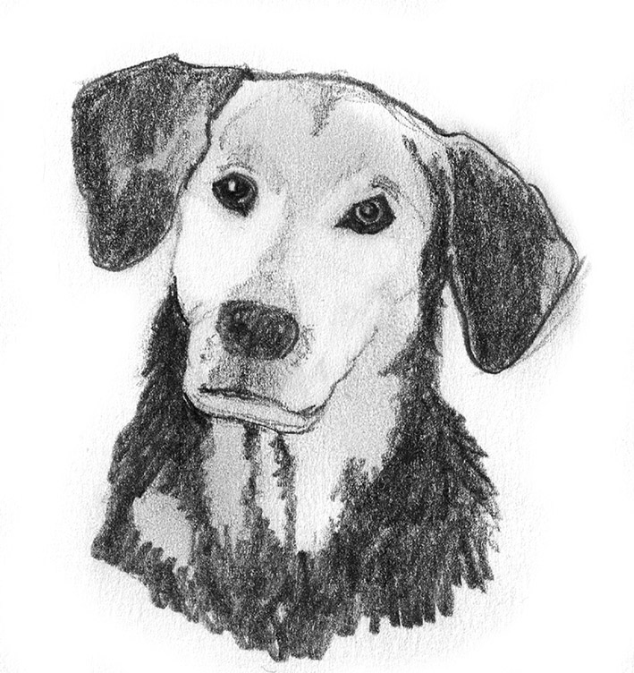 free sketches of dog