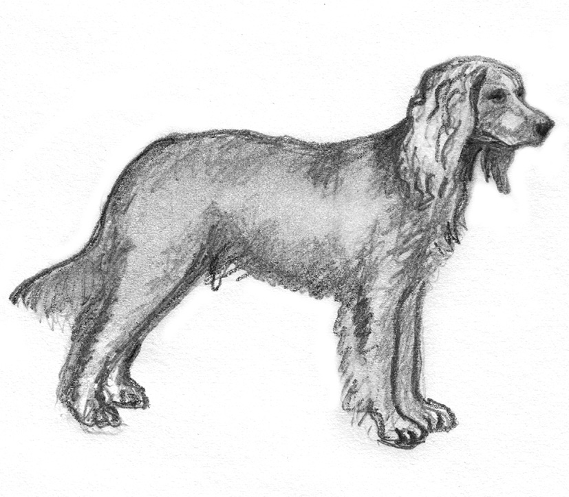 pencil sketch of pointer