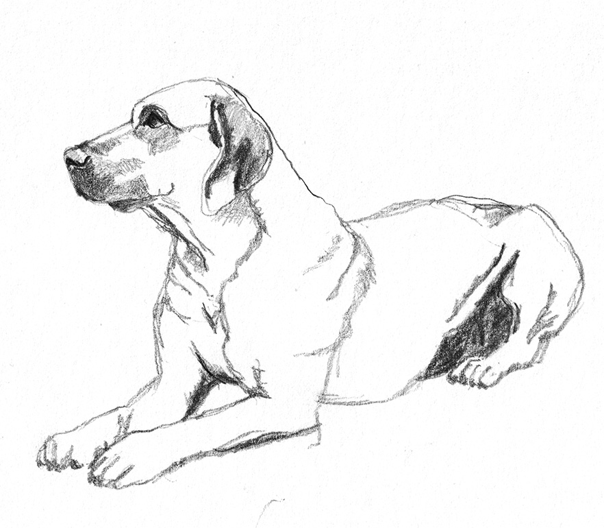 Rhodesian ridgeback dog sketches