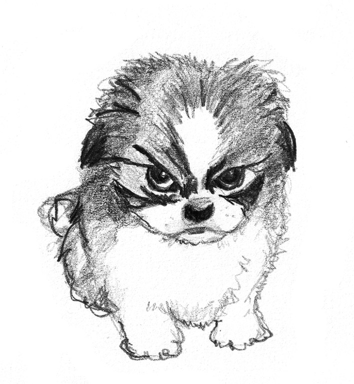 Sketch Of Small Angry Dog