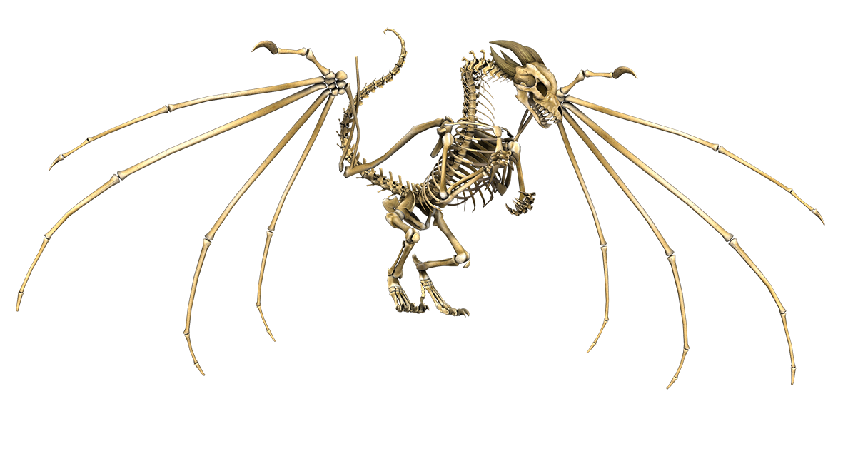 dragon skeleton