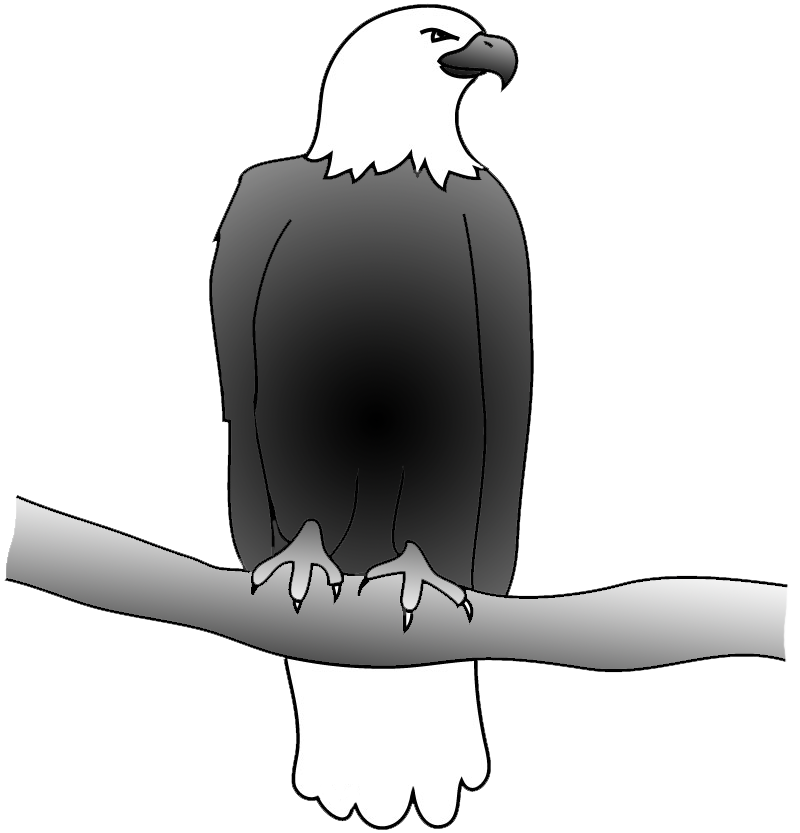 drawing of bald eagle on a branch