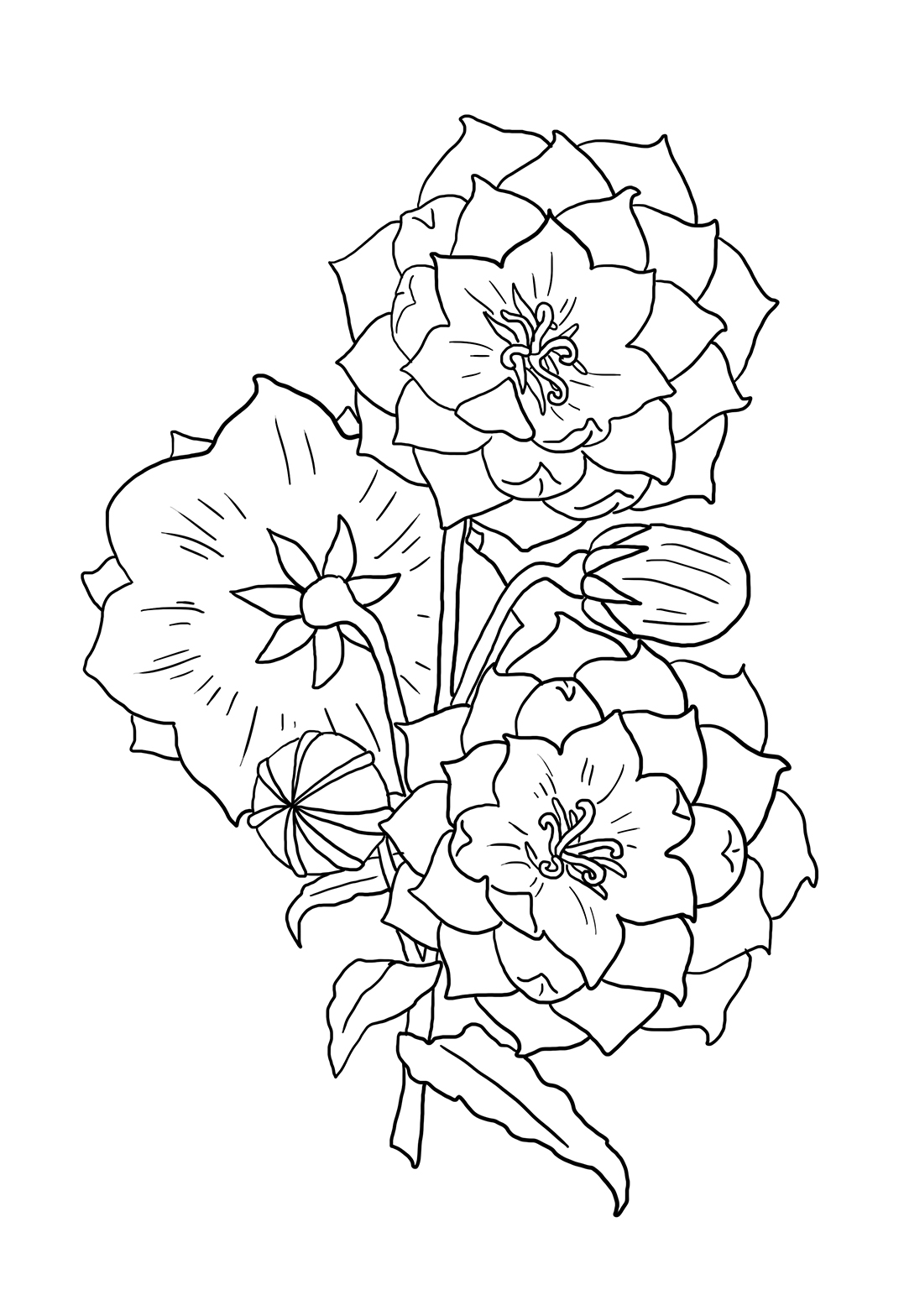 drawing of flower to print and color