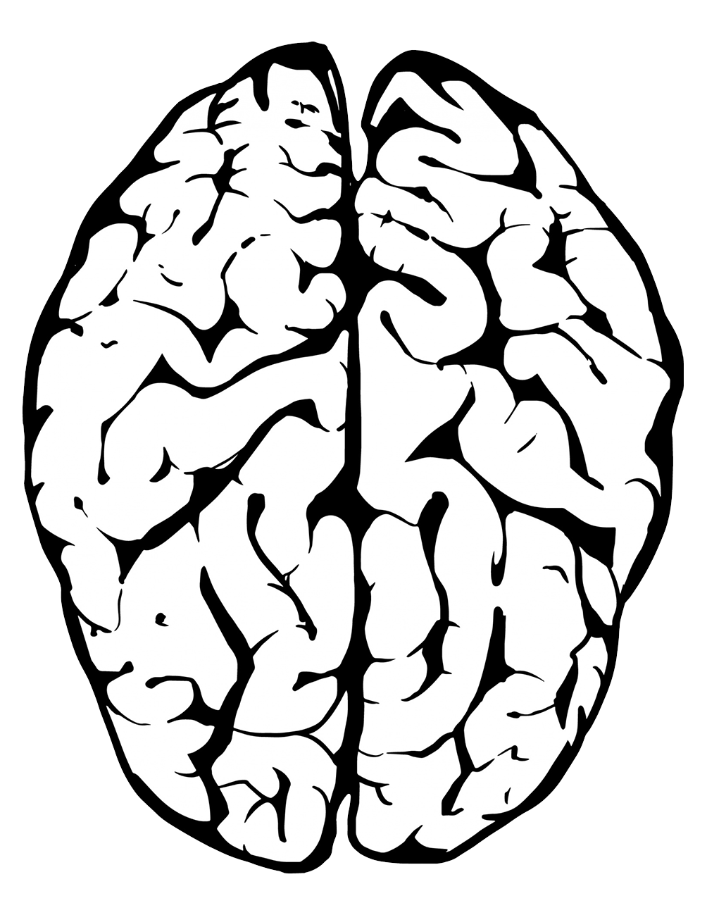 drawing of the human brain