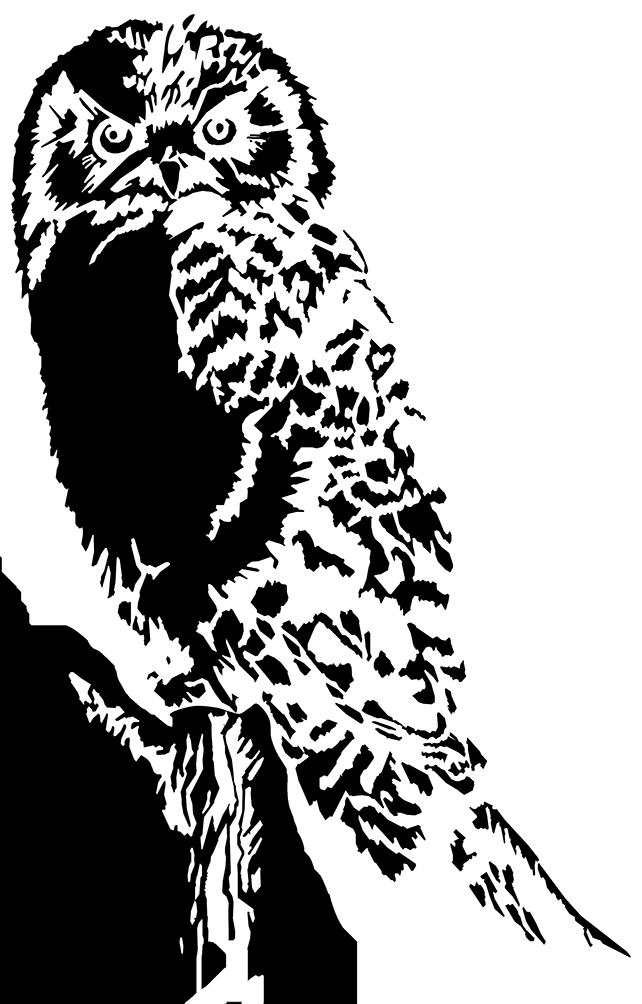 owl drawing black white