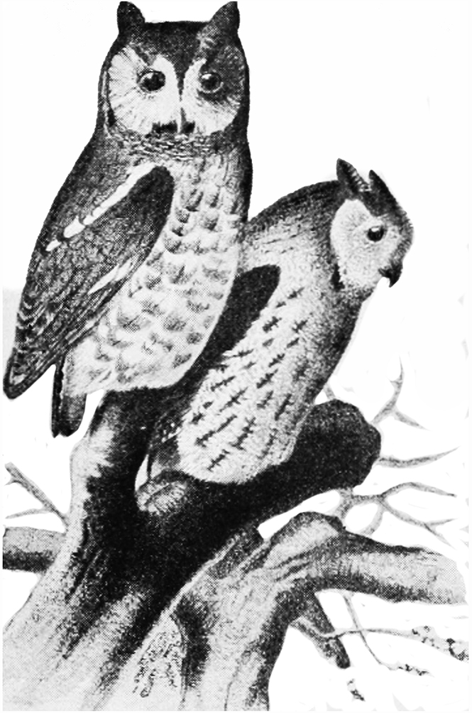 drawing of two owls