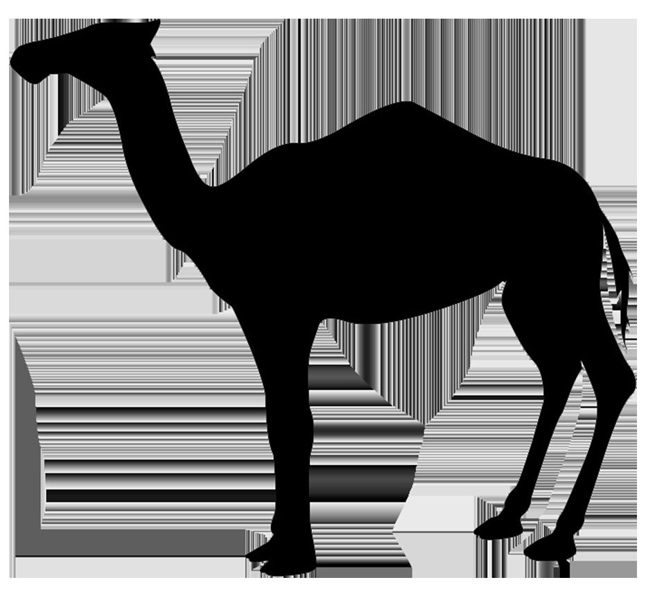 dromedary silhouette