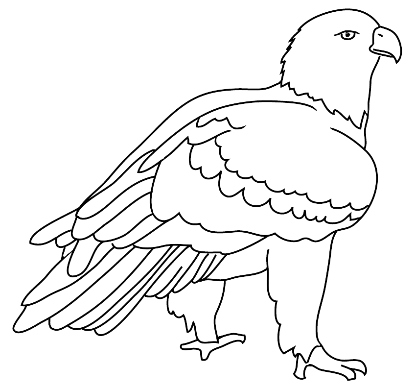 Eagle drawing outlined
