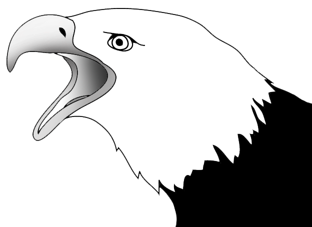 Drawing of screaming bald eagle