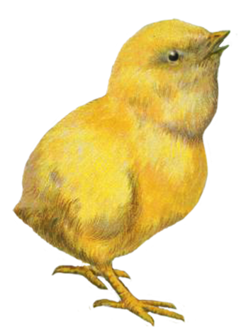 Easter chicken clip art