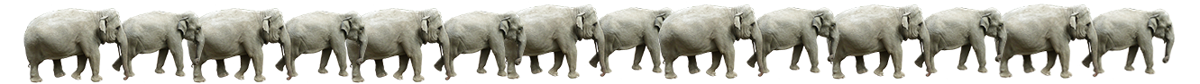 elephant pictures border