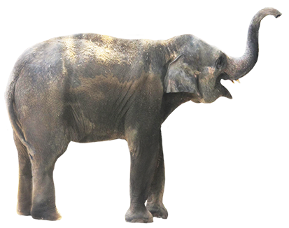 Elephant clipart PNG