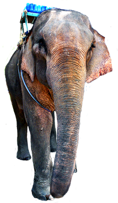 clipart of elephant