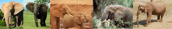 elephant facts border