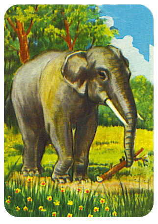 image of elephant in jungle