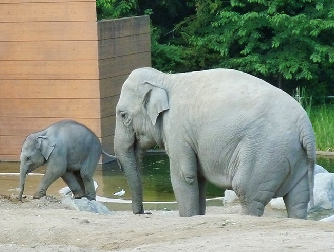 baby elephant on adventures