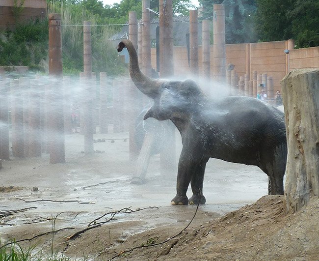 elephant having a shower