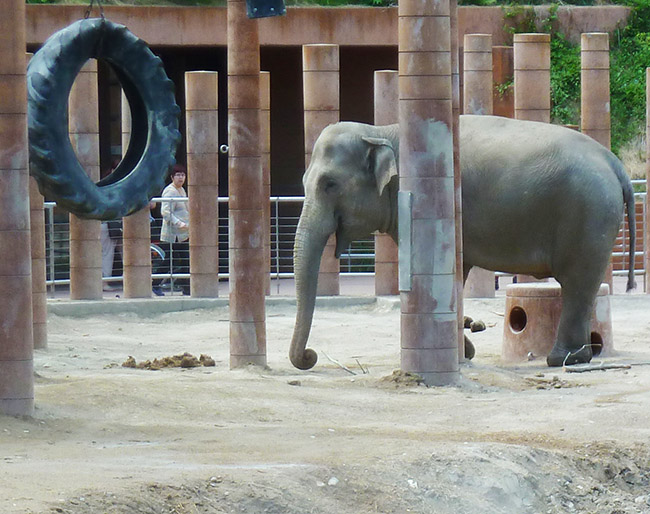 elephant playground in zoo