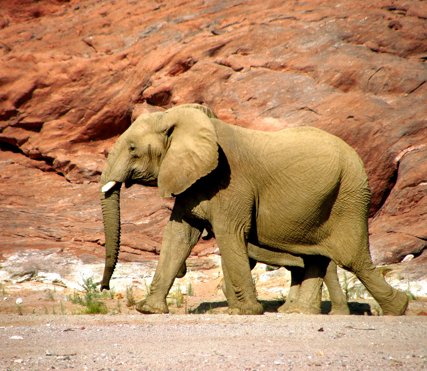 elephant in Rocky Canyan