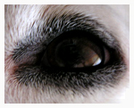facts about dogs eye close