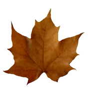 fall leaves brown leaf clip art