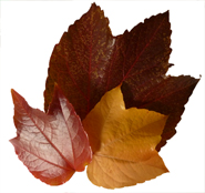 autumn graphics red leaves