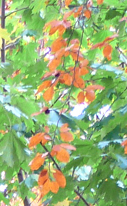 fall pictures soft red green