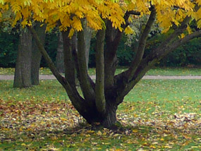 fall photos tree yellow leaves grass