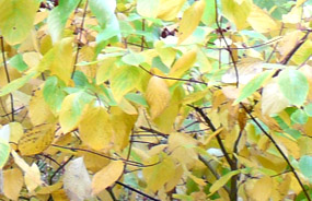 Yellow green fall photos
