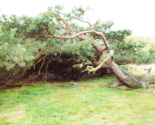 fallen tree on moorland