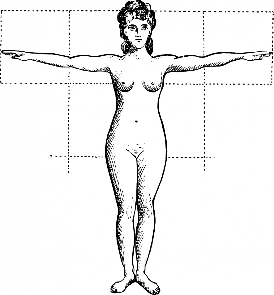 female proportions