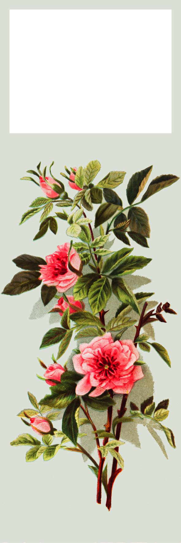wild rose flower bookmark