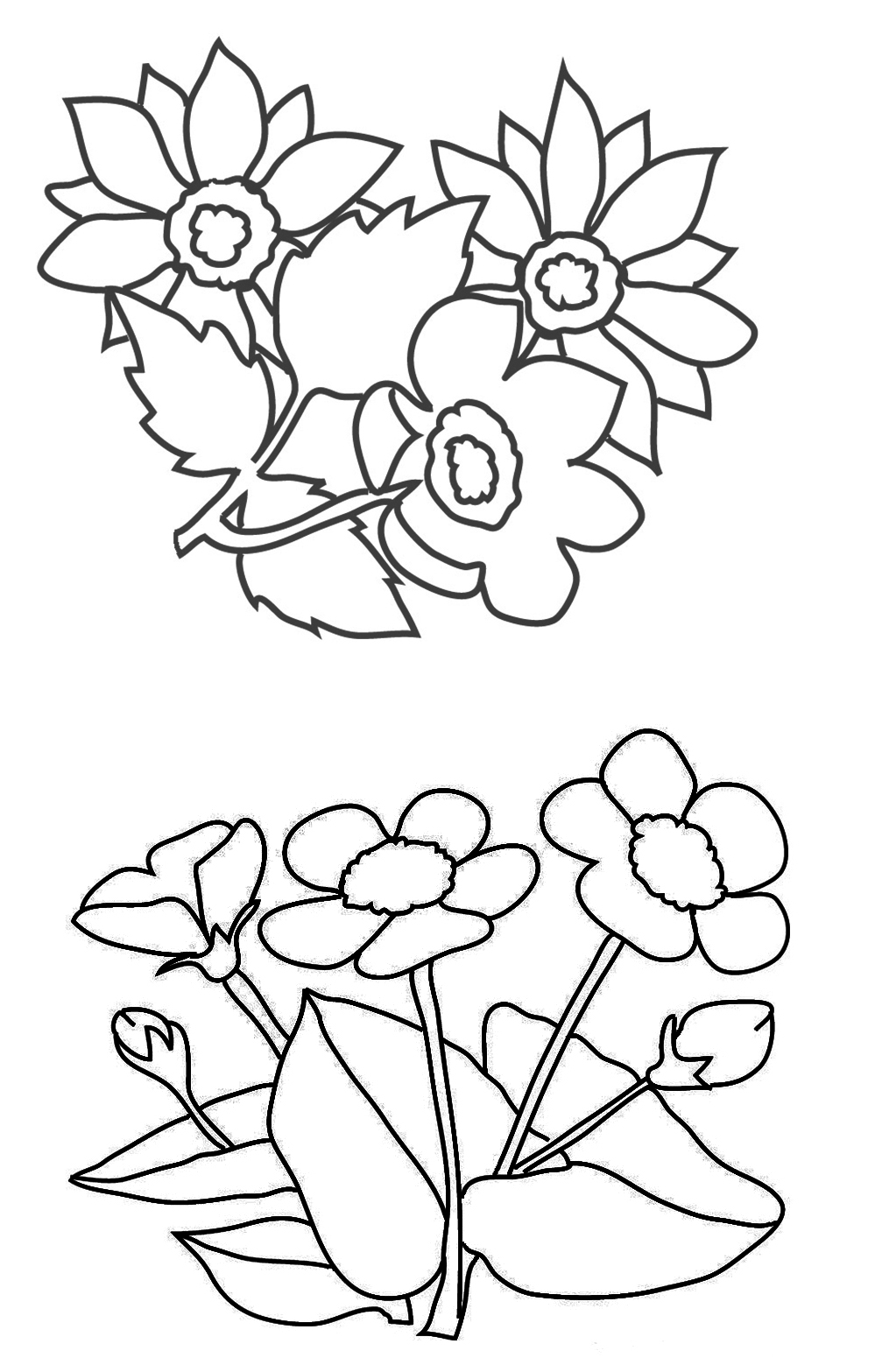 coloring page with buttercups