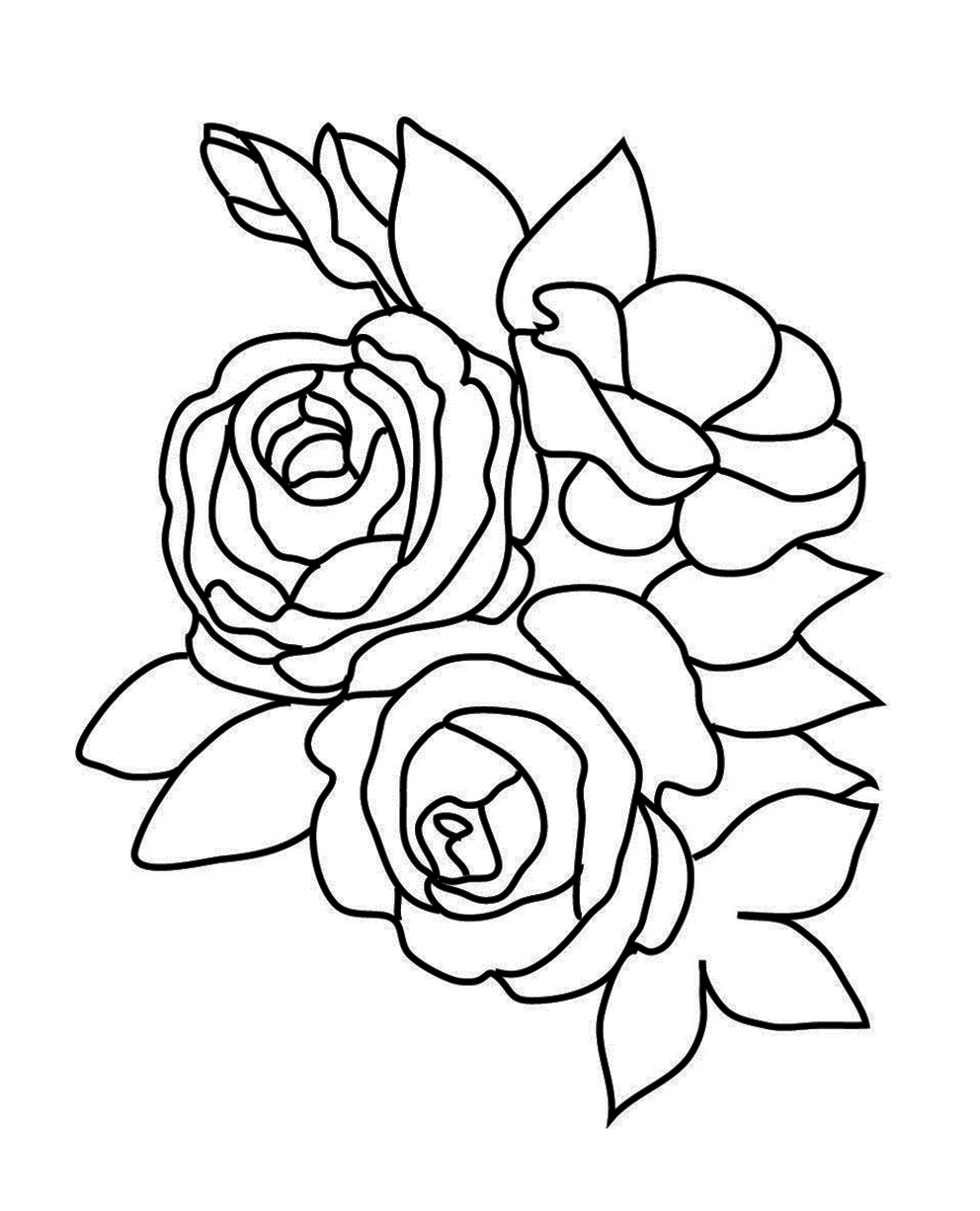 Coloring sheets roses - Rose Sketch To Color Rose Sketch Three Roses