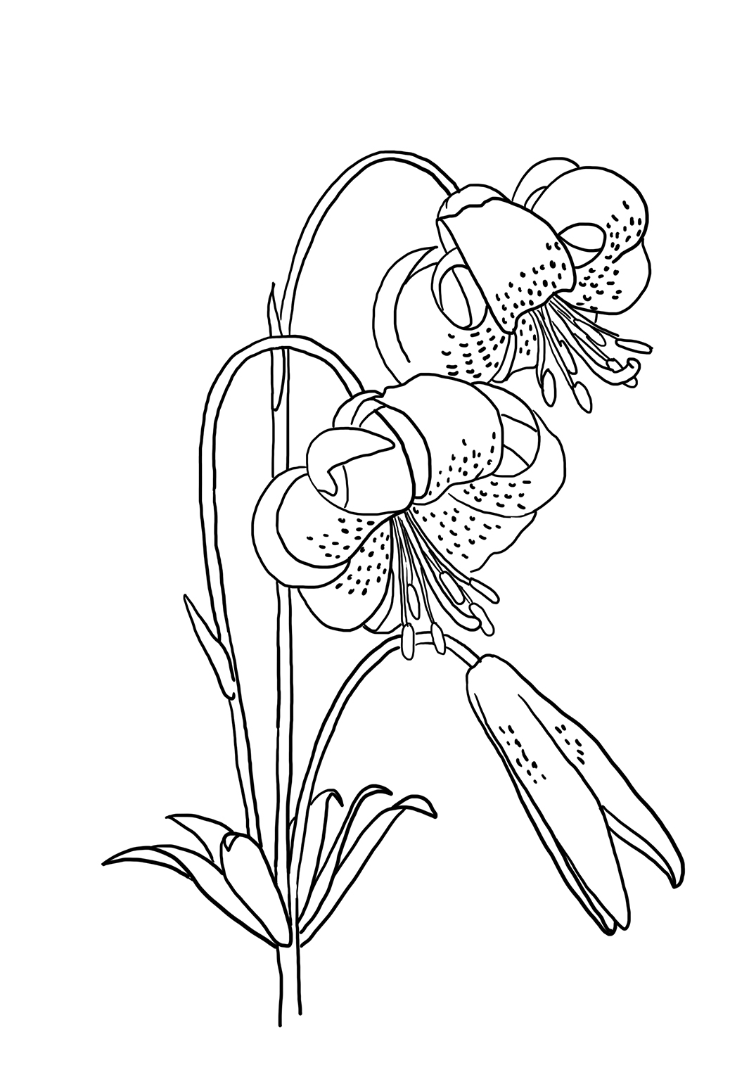 flower drawing to color
