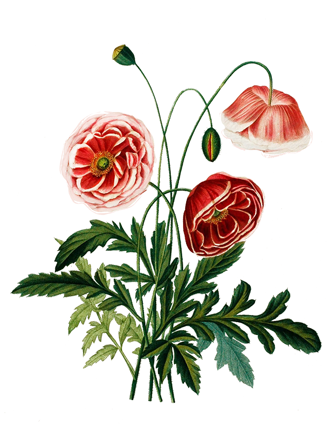 digital scrapbooking flowers