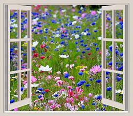 flower garden seen through window