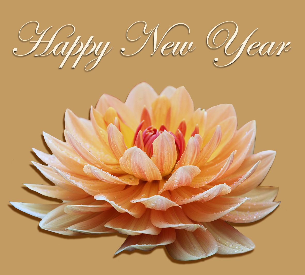 New Years clipart flower wish