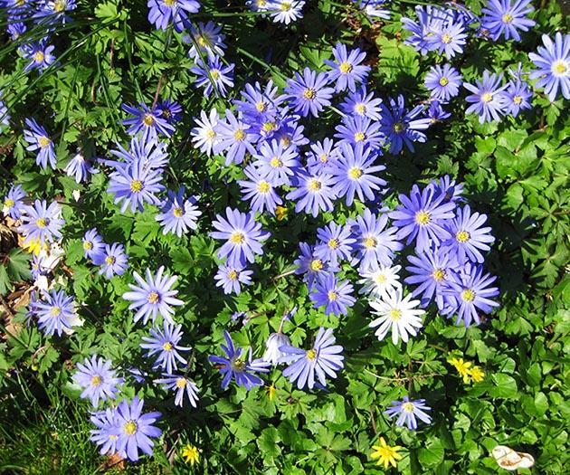 blue flowers in green grass