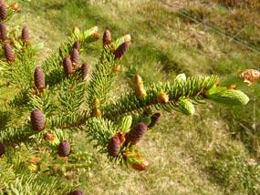 flower pics cones