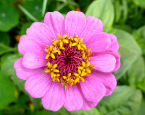 flower pics purple flower bloom