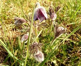 clip art flowers spring