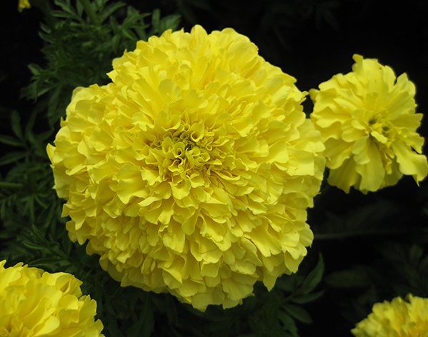 flower pics yellow flowers